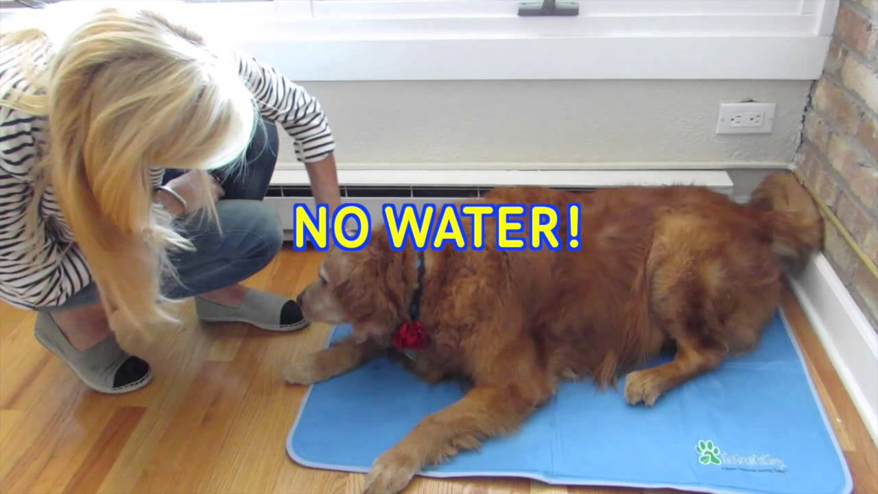 Dog Cooling Pad Orthopedic Bed