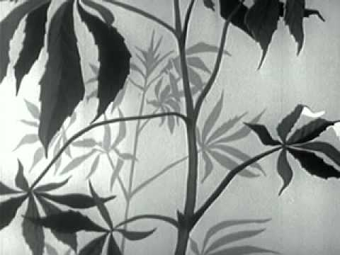 Drug Addiction: 1951 Encyclopedia Britannica Propaganda Film