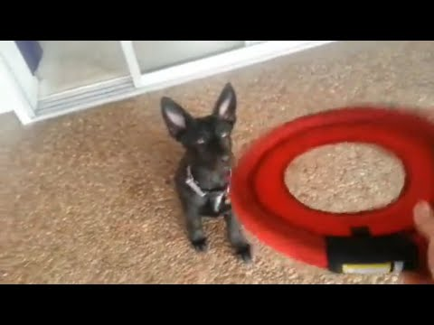 How To Teach Your Dog To Catch A Frisbee   Tips and Tricks   In5D com