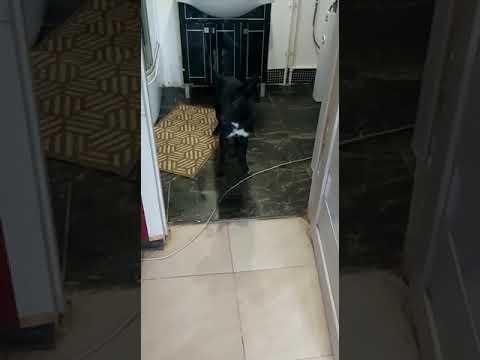 Эрмин - позитивный щенок ищет дом