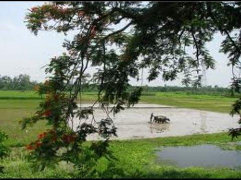 বঙ্গ আমার জননী আমার Bongo Amar Jononi Amar Dwijendrageeti Kalyansunder