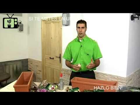 Jardineria en casa parte 1 jardiner a tv youtube - Jardineria en casa ...