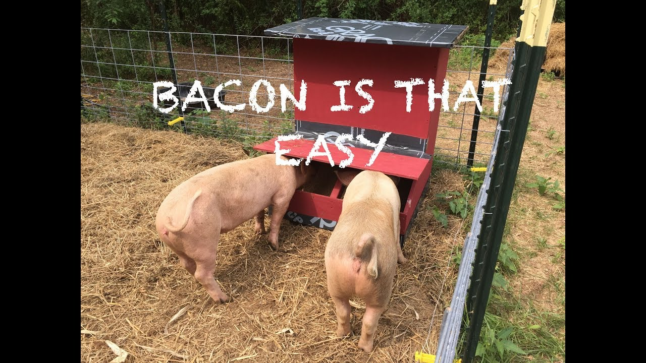 BUILDING AN AUTOMATIC PIG FEEDER...SAY