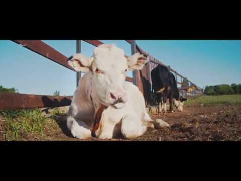 """Съемка промо ролика для фермерского хозяйства """"Родные Ладони"""""""