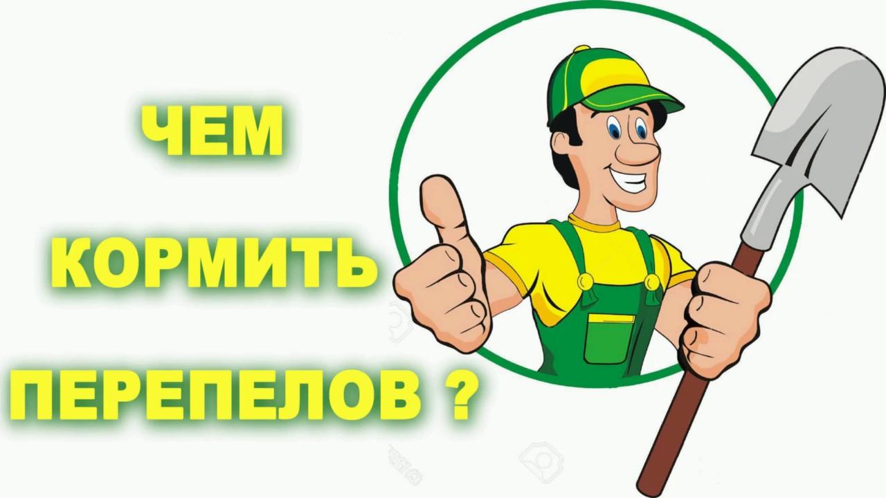 Интернет-магазин зоотоваров багира-zoo, москва, россия. Всегда можно купить зоотовары с доставкой по россии.