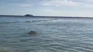 Лучший пляж отель  Sentido Reef Oasis Senses Resorts 5* Египет 2019