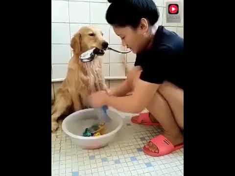 Dünyanın en güzel videosu