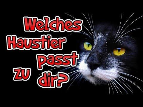 ✔ Welches Haustier passt zu dir? | Persönlichkeitstest