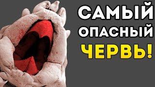 САМЫЙ ОПАСНЫЙ ЧЕРВЬ! - Insatia