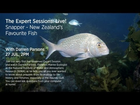 Darren Parsons: Snapper - NZ's Favourite Fish (LIVE Session)