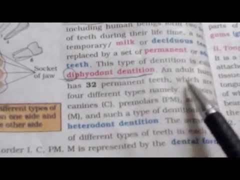 Intermediate second year zoology(digestive system)