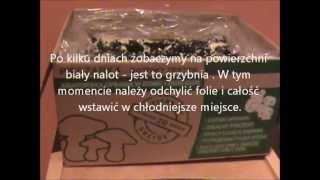 Pieczarka - Instrukcja uprawy pieczarki  - goto podłoże firmy PLANTO