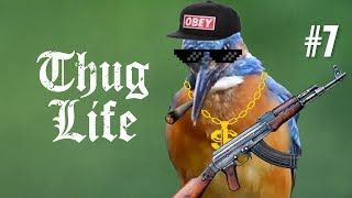 Download 10 MIN OF DANK BIRB MEMES #7 Mp3 and Videos