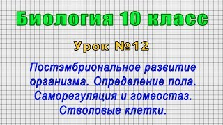 Биология 10 класс (Урок№12 - Постэмбриональное развитие организма. Опред. пола. Стволовые клетки.)