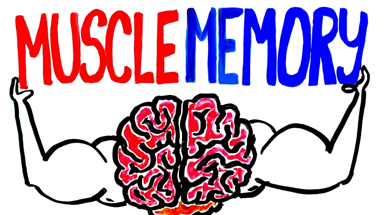 Image result for muscle memory