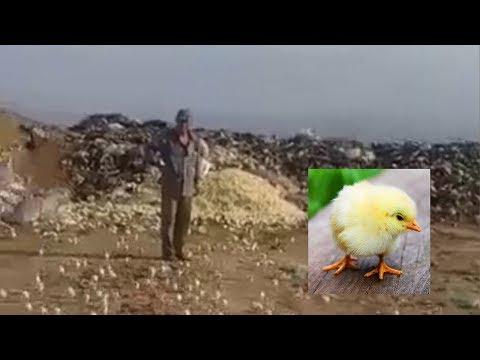 Bozuk Diye Çöpe Atılan Yumurtalardan...