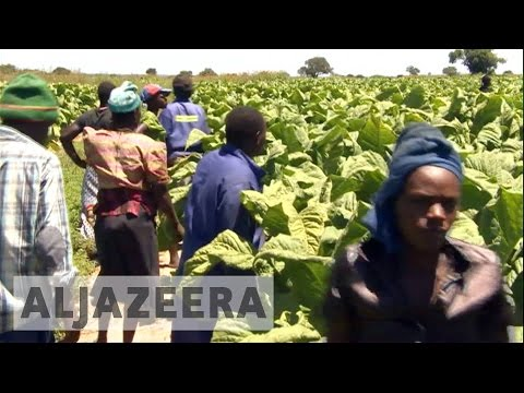 Zimbabwe: White farmers waiting for compensation for seized land