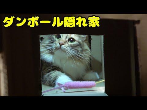 猫のアスレチック作って遊んでみた