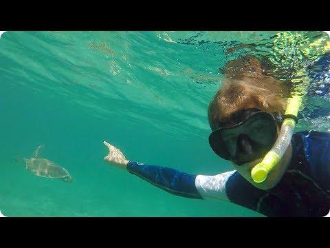Swimming with Turtles in St Thomas | Evan Edinger Travel Vlogger