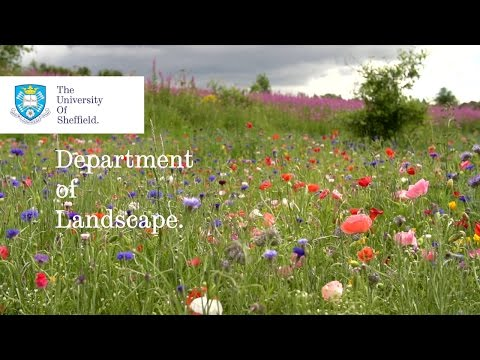 The Department of Landscape