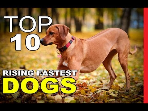 Top 10 Dog Breeds Rising Fastest in Popularity