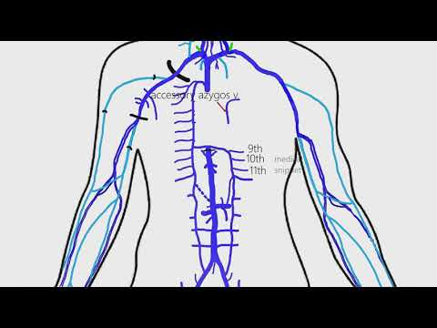 Veins Of Thorax And Abdomen | Inferior Vena Cava | Azygos Vein | Portal Vein | Coronary Sinus