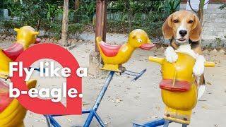 This Adorable Footage Shows A Cute Puppy Enjoying A Ride On A Playground Merry Go Round | SWNS