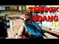 Tengkek Udang Burung Masteran  Mp3 - Mp4 Download