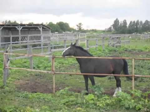 Как ржет лошадь видео