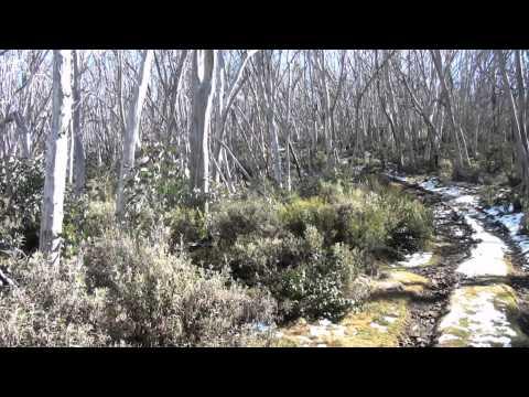 Alpine National Park Corn Hill