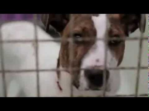 TV Series Premiere Part 1   Underdogs for the PEDIGREE® Adoption Drive
