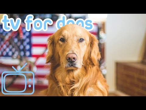 4th of July Dog TV! HOURS of TV and Music to Stop Dog Firework Anxiety!
