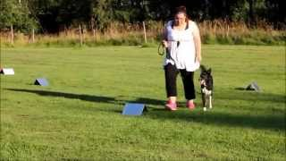 Rally - Obedience Training With My Border Collie