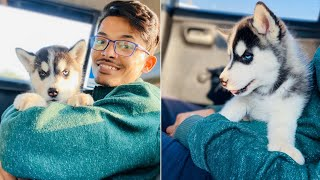 I Bought Most Expensive Dog 😍    SIBERIAN HUSKY    Review reloaded
