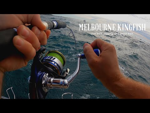 Melbourne Kingfish 2020