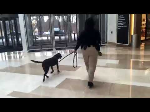 Special police K-9 handler and K-9 Grace show how they patrol MGM National Harbor