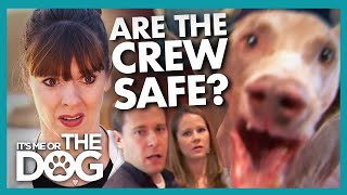 Unpredictable and Aggressive Weimaraner Lunges at Camera Crew and Guests | It's Me or the Dog
