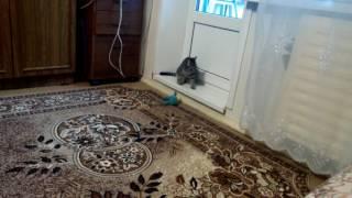 Фильм про кошку Мусю 3