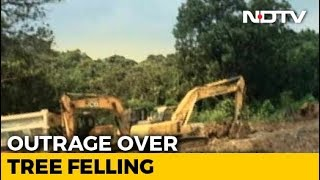 top-court-to-hear-case-for-mumbai-s-aarey-trees-activists-get-bail