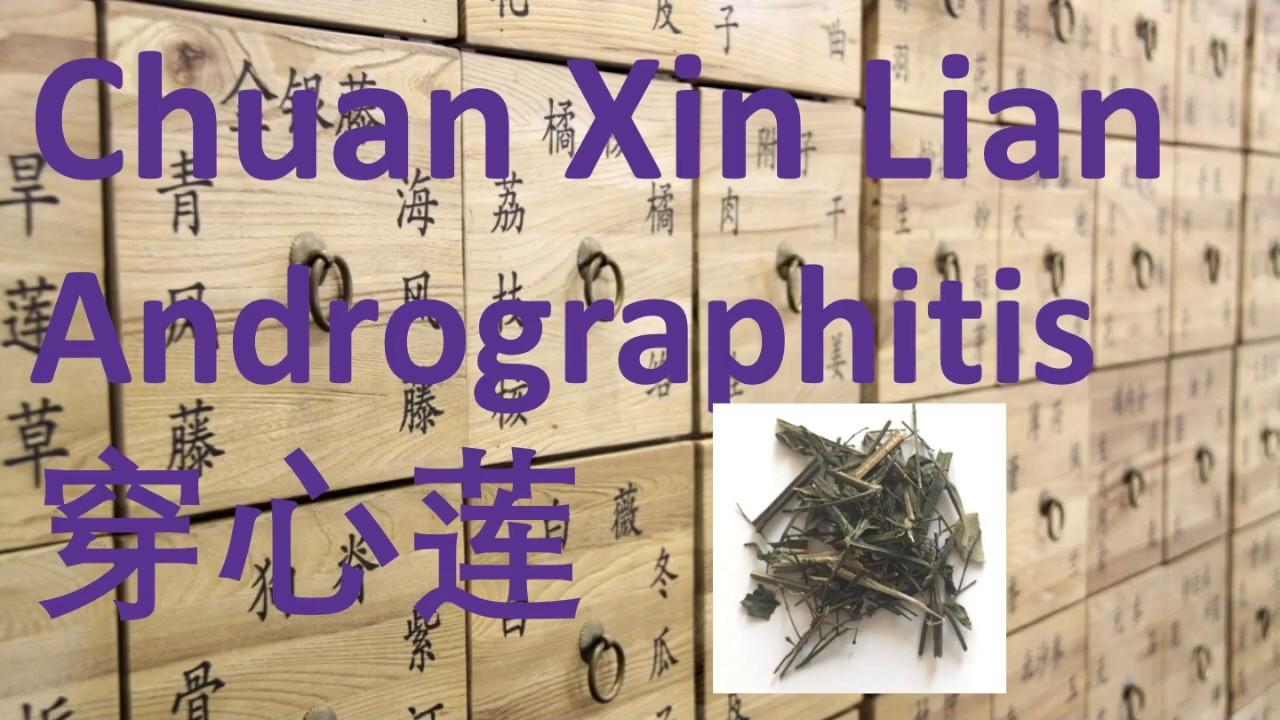 57 Chinese Herbal Medicine, Traditional Chinese Medicine – Chuan Xin Lian (Andrographitis)穿心莲-中医中药草药 #Herbalmedicine