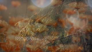 Bokeh Hearts Overlays thumbnail