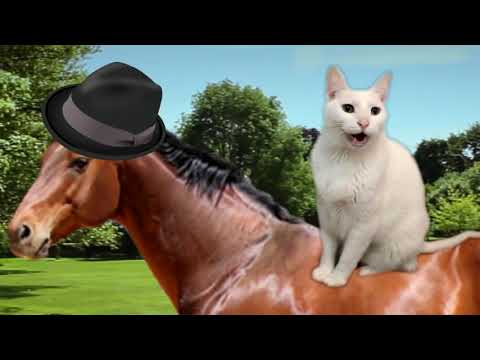 Cats Sing Yankee Doodle (Barney Theme Song) -  Cats Version