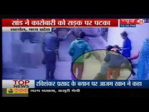 bull hit man on road Shahdol MP