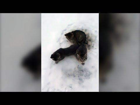 Alberta man uses lukewarm coffee to rescue frozen, abandoned kittens