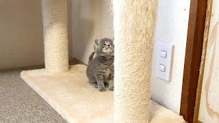 登りたいけど登れない子猫