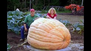 Amazing Biggest Fruit Vegetable In The World