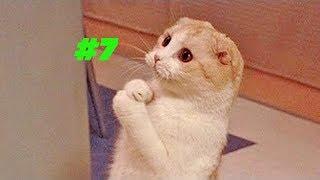 Смешные коты и котики, приколы про котов до слез - Смешные кошки #7
