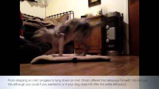 Puppy 101 Teaching Go To Mat