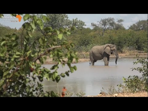 African Elephant Hunt With .600NE, Ep. 48
