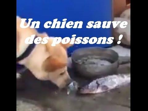 sauvepoissons